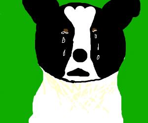 crying doggo.