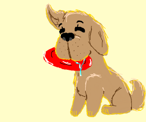 Dog fetches red plate