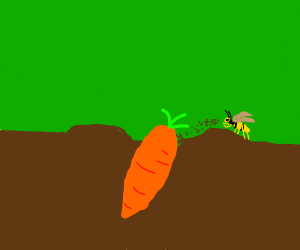 wasp buries carrot