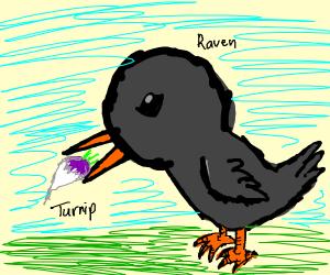 Raven eating a Turnip
