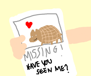 Have you seen my armadillo?
