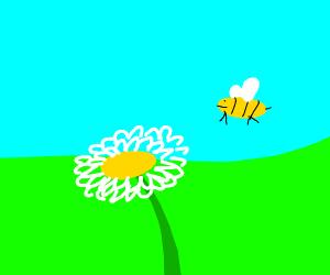 Bee Exploring