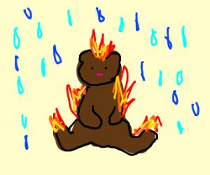 bear is on fire in the rain