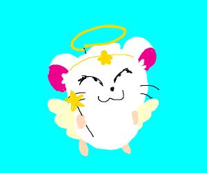 angel hamster
