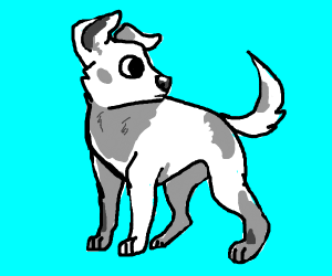 white and grey spotted dog
