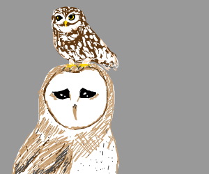 Owl hops on top of other owl. Other owl sad.