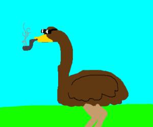 Sunglasses wearing emu smoking pipe
