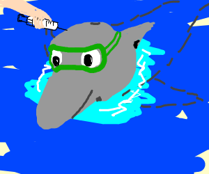 a dolphin with goggles getting shot
