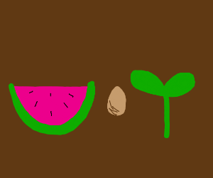 watermelon, a seed, and a smol plant