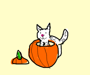 Cat eats out of a pumpkin