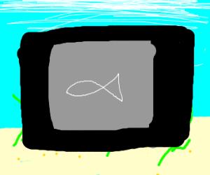 fish x-ray