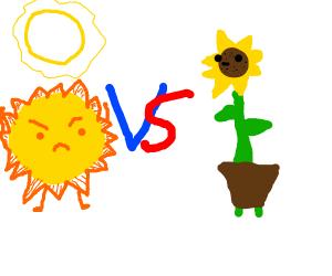 Sunflower vs Sun