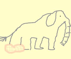 Elephant on peanut
