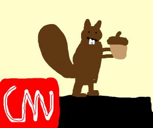 squirrel on CNN