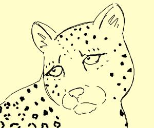 kind of a sad leopard