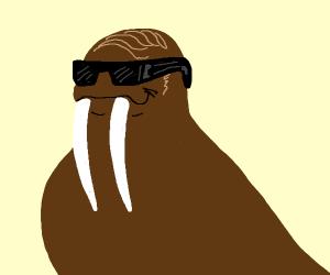Glamorous walrus
