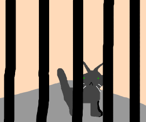 Cat goes to prison