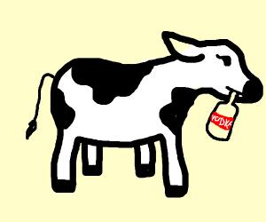 Cow drinks vodka