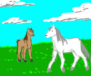 Brown and white horse in the field