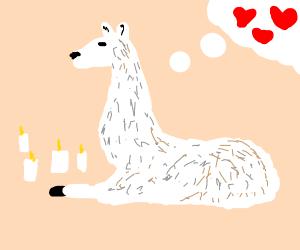 Romantic Llama