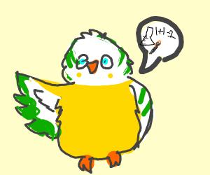 Eclectic Parakeet