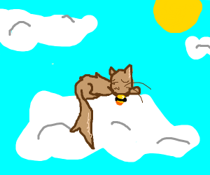 Cat sits in the clouds