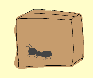 ants in a box