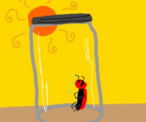 Bug in glass box. Sun will soon kill him.
