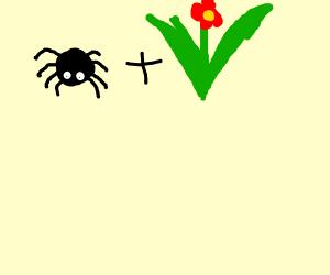spider + plant