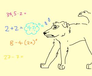Horrified dog knows math