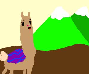 llama singing next to mountains