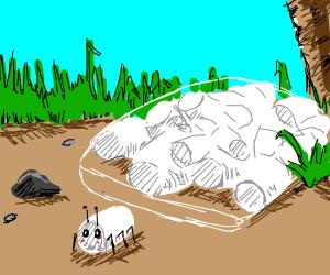 marshmallow bug