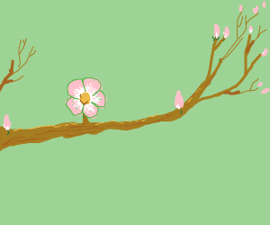 Springs first blossom (aww so cute)