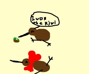 a wingless bird eats a kiwi