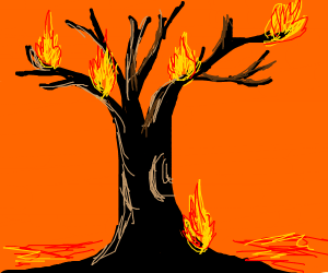 Tree on fire!