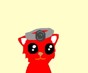 fox doctor