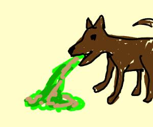 Dog Puking