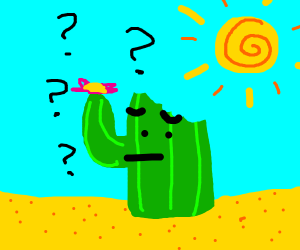 cactus that's been nommed is confused