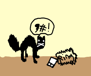cat running away from phone after answearing
