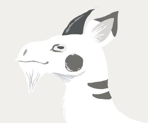 goat-kachu