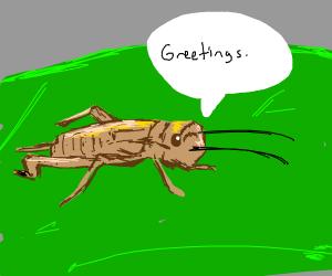 Cricket says hi
