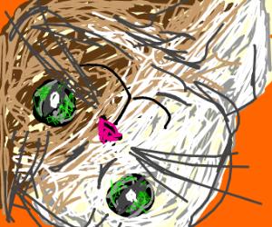1/2 white 1/2 brown cat owo