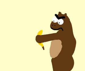 Angry bear holds banana