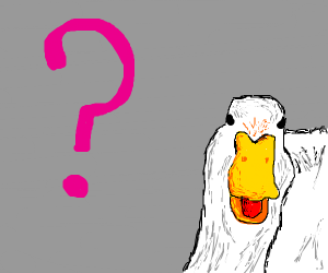 confused duck