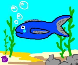 Fish crying