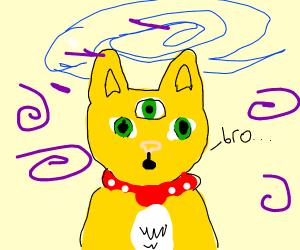 Cat on Drugs