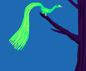 green longtailed bird in a tree