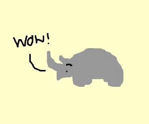 Rhino impressed