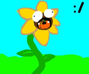When your sunflower eats your pumpkin :/