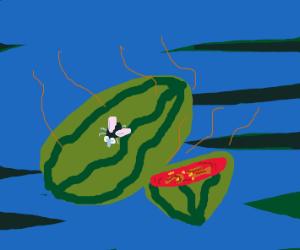 Rotten Watermellon
